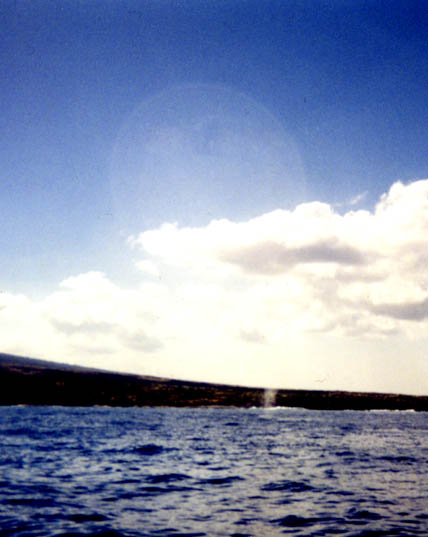 Bubble in sky above whale spout by Cheyenne.